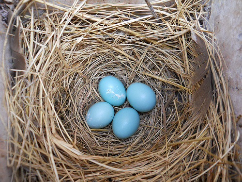 eggs-in-nest
